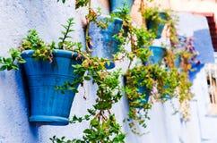 Rośliny wiesza na ścianie fotografia stock