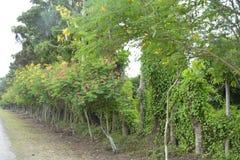 Rośliny wzdłuż drogi Guihing, Hagonoy, Davao Del Sura, Filipiny obraz stock
