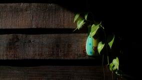 Rośliny z ścianami obraz stock