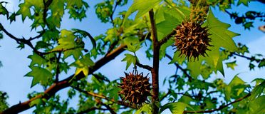 Rośliny z cierniami i zieleń liśćmi zdjęcie royalty free