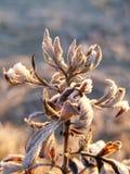 Rośliny zakrywać w hoar mrozie Obraz Stock