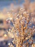 Rośliny zakrywać w hoar mrozie Zdjęcia Stock