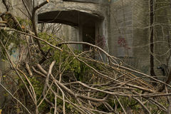Rośliny Zakrywa wejście Zaniechany budynek Zdjęcia Stock
