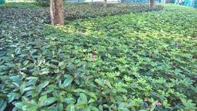 Rośliny zakrywa ziemie wokoło drzew zdjęcie royalty free