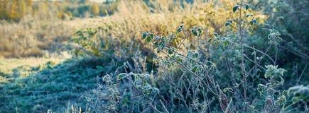 Rośliny zakrywają z mrozem w jesieni Fotografia Royalty Free