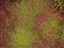 Rośliny zieleń z menchiami obrazy royalty free
