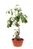 rośliny zielonego domu Zdjęcie Royalty Free