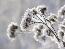 rośliny zima Zdjęcie Royalty Free
