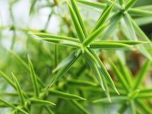 rożek rośliny Zdjęcie Stock