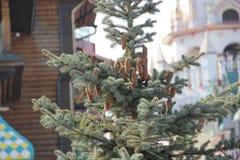 Rożki na drzewie zdjęcia stock