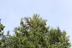 Rożki na wierzchołku Zdjęcie Royalty Free