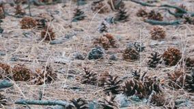 Rożki w Sosnowym lesie zbiory wideo