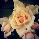 ro Royaltyfri Fotografi