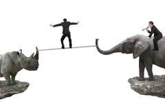 Ελέφαντας οδήγησης ατόμων ενάντια στο ρινόκερο με άλλο που ισορροπεί ro Στοκ Φωτογραφία