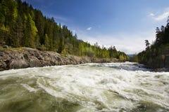 Río del bosque Imágenes de archivo libres de regalías