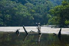 Río en la playa Foto de archivo libre de regalías