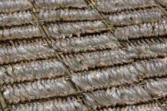 rożenków Cambodia sardynka Fotografia Stock