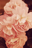 ro för foto för härlig bokehträdgårdlampa naturliga Royaltyfria Foton