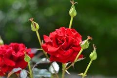 ro för foto för härlig bokehträdgårdlampa naturliga Royaltyfri Foto
