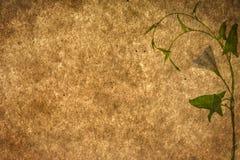 rośliien zielone stare papierowe tekstury Obrazy Stock