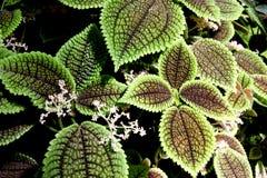 roślina Obraz Stock