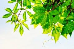 roślina Obrazy Stock