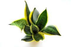 roślina Zdjęcie Stock
