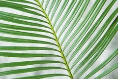 roślina Zdjęcia Stock