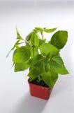 roślina Fotografia Royalty Free