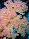 roślina Zdjęcia Royalty Free