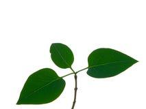 roślina Fotografia Stock