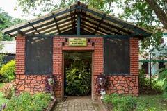 Roślina dom Zdjęcie Royalty Free