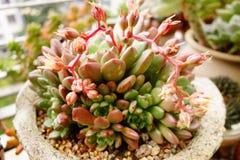 roślina i Zdjęcia Stock