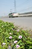 Roślina i kwiat na drogi stronie Zdjęcie Stock