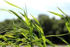 Roślina i wiatr Zdjęcie Stock
