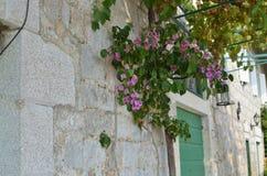 Roślina jako domowa dekoracja Zdjęcia Stock
