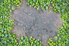 Roślina kamienia deska. Obraz Stock