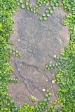 Roślina kamienia deska. Fotografia Stock