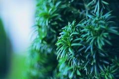 Roślina krzak Fotografia Royalty Free