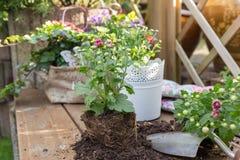 Roślina kwiaty zdjęcia stock