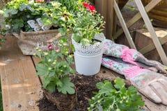 Roślina kwiaty obraz royalty free