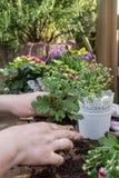 Roślina kwiaty Zdjęcie Royalty Free