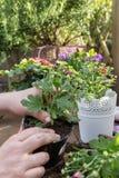 Roślina kwiaty Zdjęcie Stock