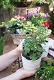 Roślina kwiaty obrazy stock