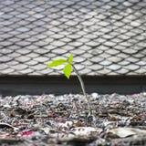 Roślina na dachu Obrazy Royalty Free