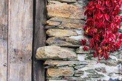 Roślina na kamieniu Zdjęcia Stock