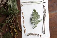 Roślina obrazek Obrazy Royalty Free