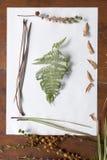 Roślina obrazek Zdjęcie Royalty Free