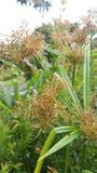 Roślina ogródy Zdjęcia Royalty Free