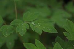 Roślina po deszczu Zdjęcie Stock
